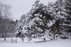 Snow Pictures 006