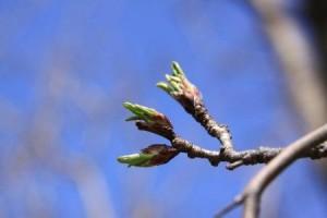 Spring Photos 002 (2)